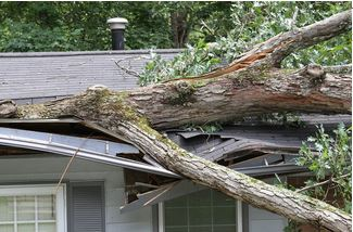 Tree-on-House